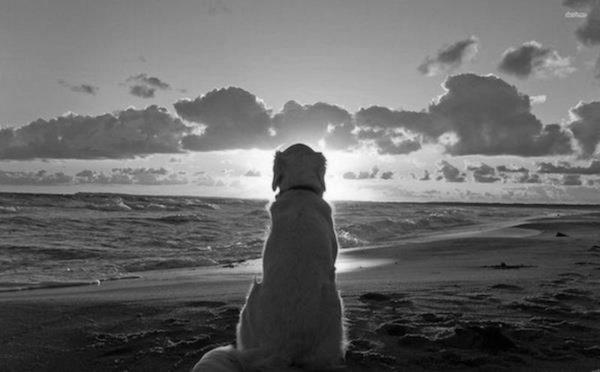 Psy nigdy nie umierają