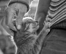 Felinoterapia. Kogo może wyleczyć kot?