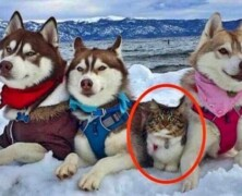 Kot, który myśli, że jest psem
