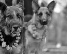 Festiwal który dziękuje psom