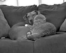 Kot opiekuje się psem