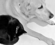 Labrador i bezdomny kociak – miłość totalna