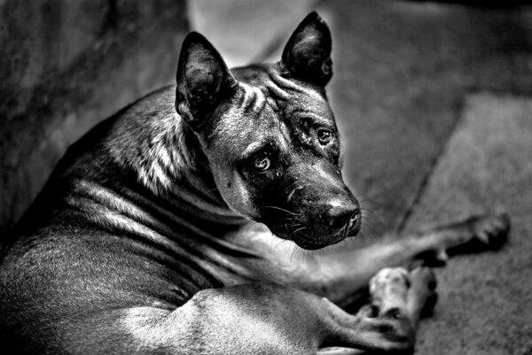 10 psich przykazań
