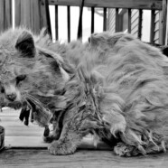 List od bezdomnego kota