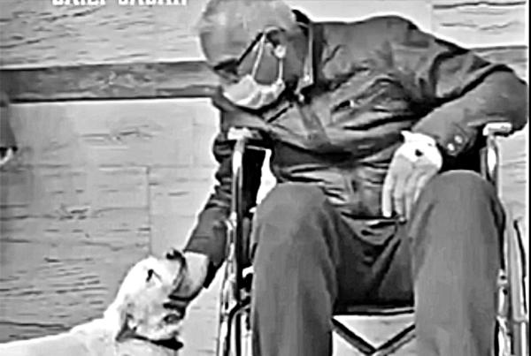 Pies najwierniejszym przyjacielem