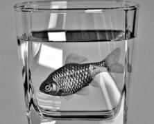 W wodzie to rybki pływają
