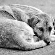 Uporać się z bezdomnością zwierząt!