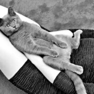 Terapeutyczna moc kota
