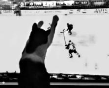Telewizja dla zwierząt
