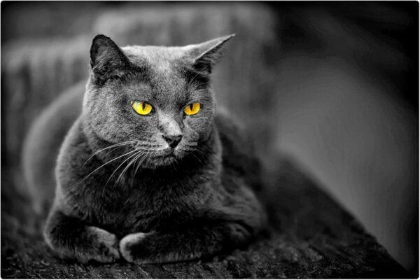 Koty są niezwykłe