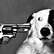 Związek Kynologiczny zabija psy!