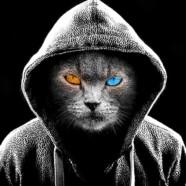Magiczne koty