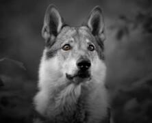 Psy wiedzą kiedy kłamiemy