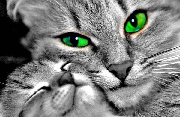 Koty to najlepsze zwierzaki na świecie
