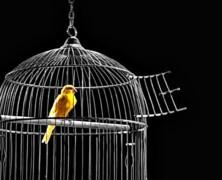 Wolność to stan umysłu